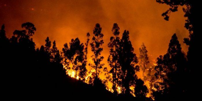 Declaración Pública: Urgencia por Protección de Suelos Post Mega incendios