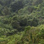 bosques-zapallar_816x428