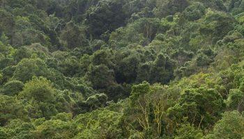 Manejo de los bosques para la mitigación y adaptación al cambio climático