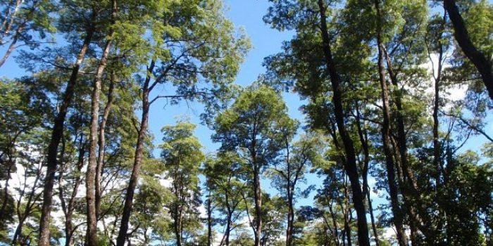 Desde una mirada transdiciplinaria libro de Núcleo TESES aborda problemas de conservación de bosques nativos